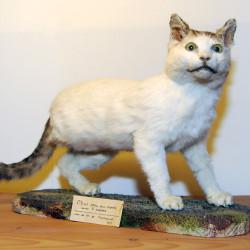 Le célèbre chat né avec trois pattes, 1922