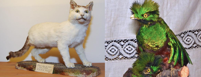 Chat à 3 pattes et Quetzals